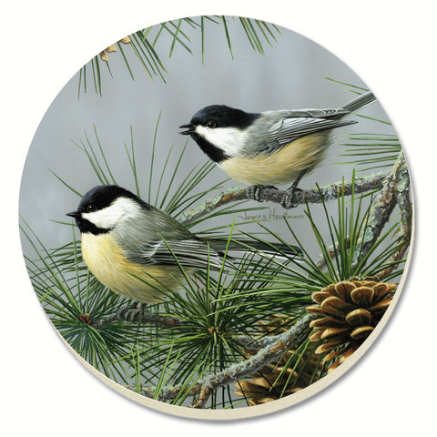 Beautiful Songbirds Chickadees Coasters - Set of 4