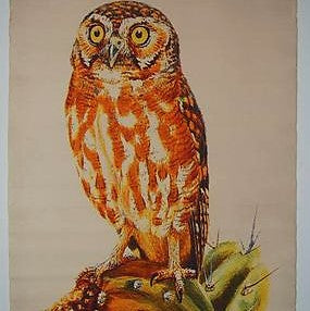 Design Legacy Owl Wall Chart Medium size 3' x 5'