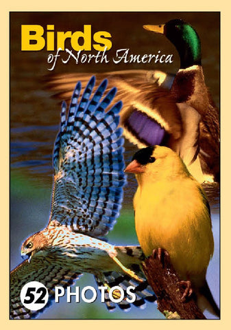 Birds of North America Mini Playing Cards
