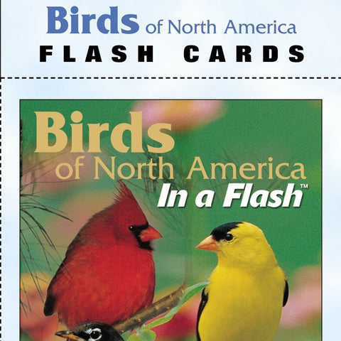 North American Birds Flash Cards