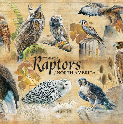 1000 Piece Common Raptors Puzzle