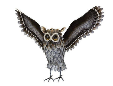 Grey Horned Owl Wings Up