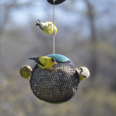 Green Seed Sphere Bird Feeder