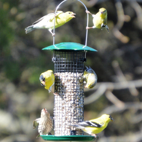 Petite Green Sunflower Feeder