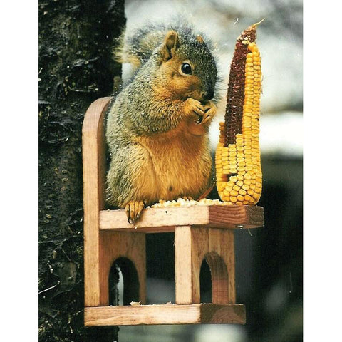 Chair Squirrel Feeder