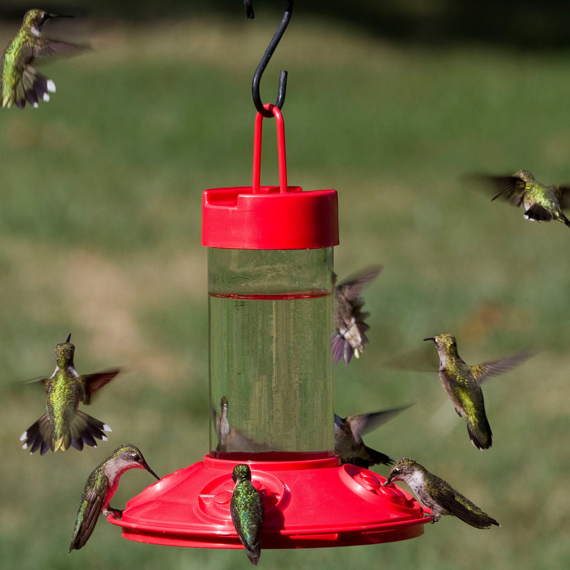 Hummingbird Collection
