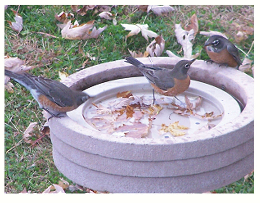Bird Bath Raft