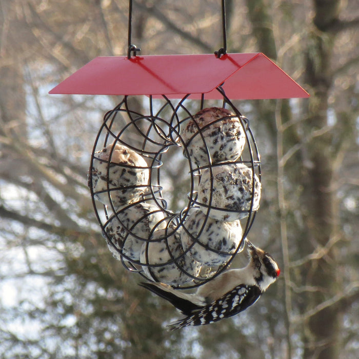 Red Roof Suet & Seed Ball Feeder