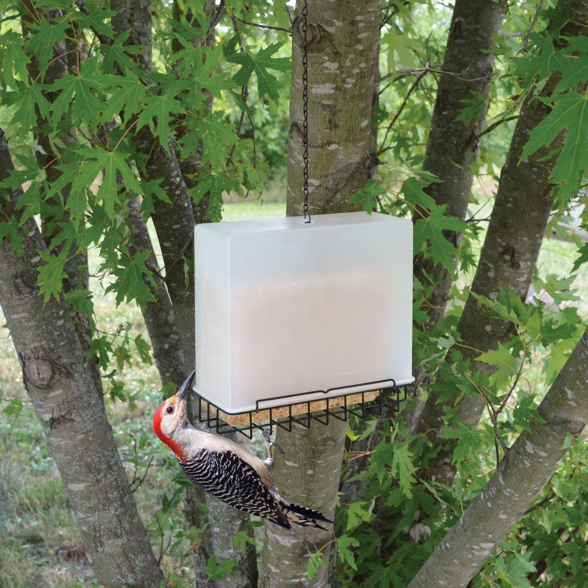 Large Suet Saver Feeder