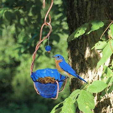 Songbird Essentials Copper/Blue Bluebird Mealworm Feeder