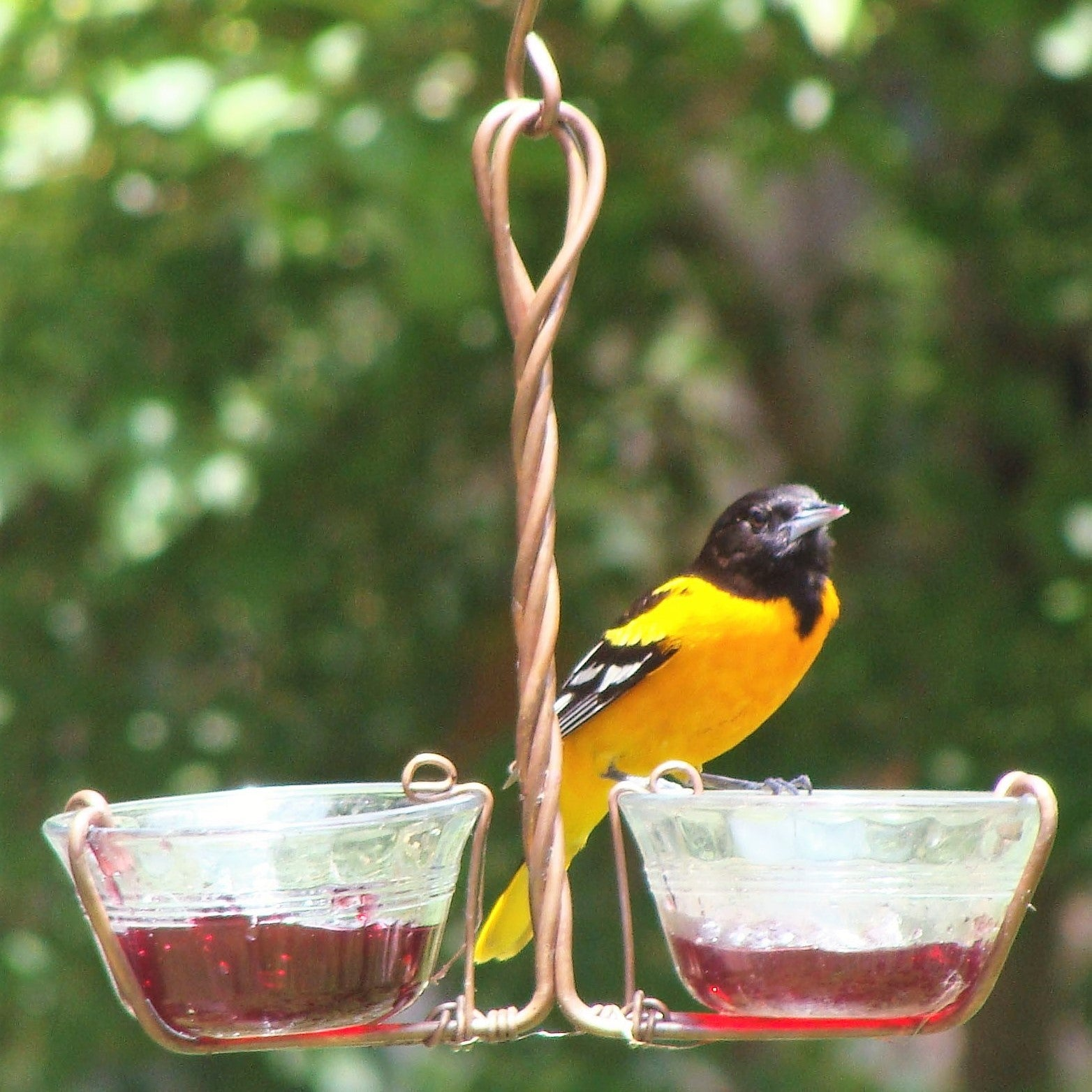 Two Cup Jelly Feeder