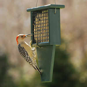 Hunter Green Suet Feeder with Tail Prop