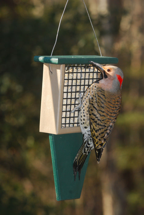 Hunter Green and Driftwood Brown Suet Feeder with Tail Prop