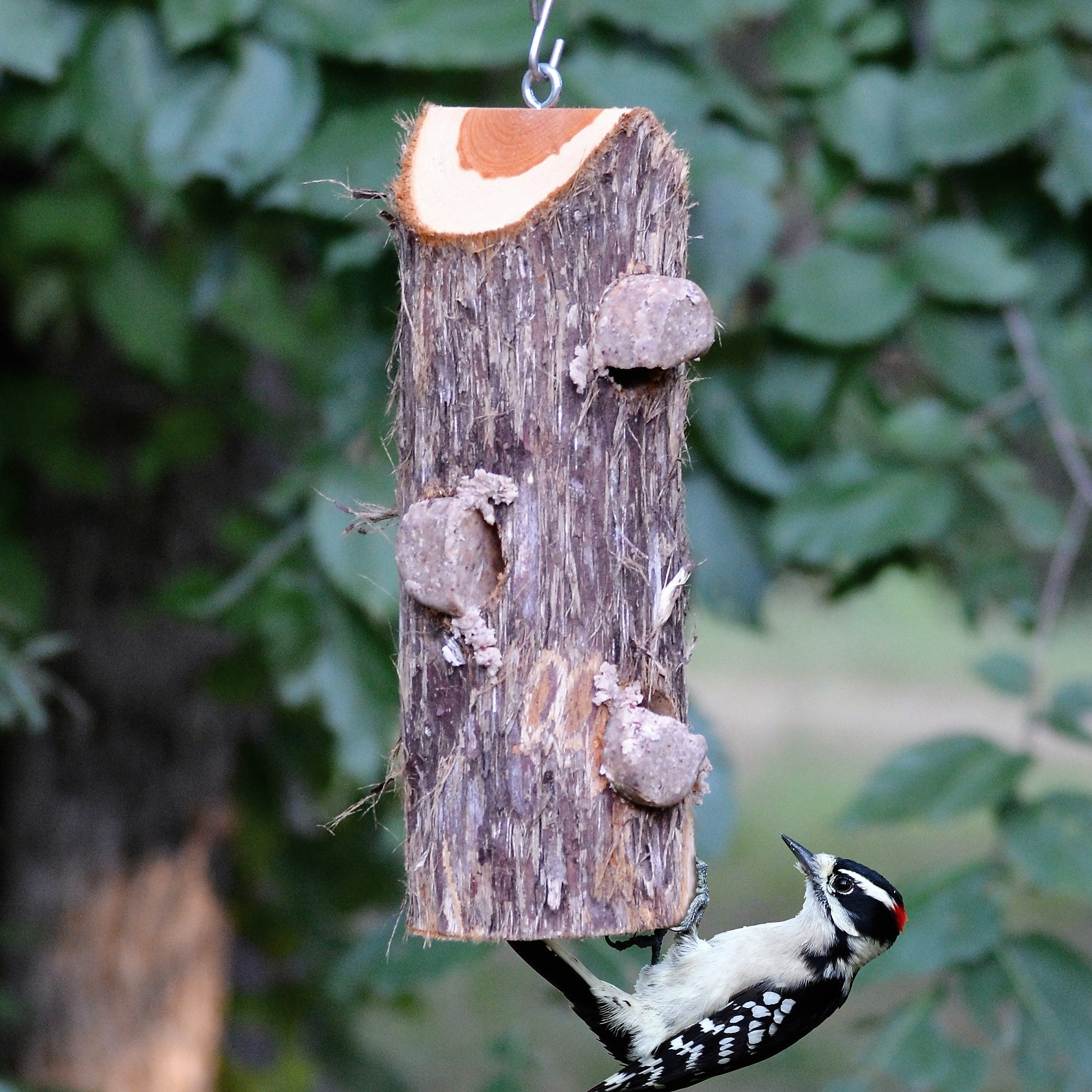 3 Plug Suet Log Without Perches
