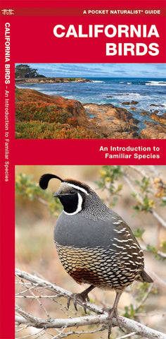 California Birds Pocket Guide
