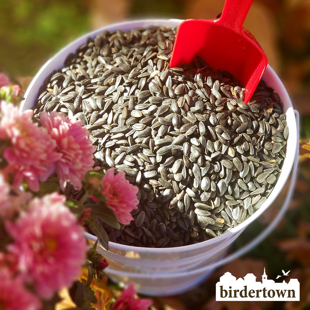 Birdertown 20 LB Black Oil Sunflower Bird Seed