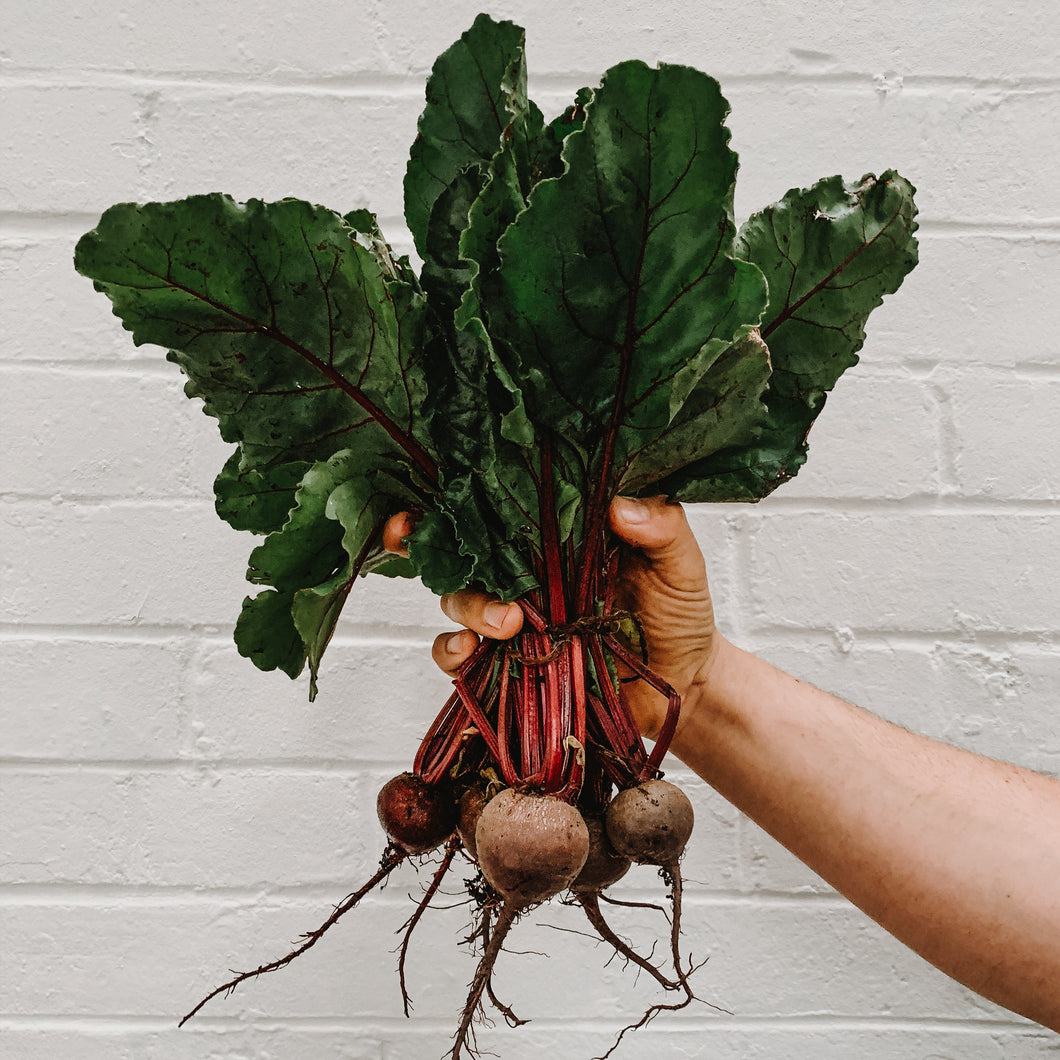 Beetroot - Bunched