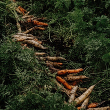 Load image into Gallery viewer, Heritage Carrots - Bunched