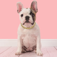 Load image into Gallery viewer, Dog Necklace Gold Chain