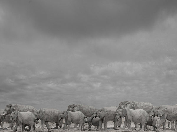 Christopher RIMMER - 'Elephant Family at Etosha Pan, Namibia'