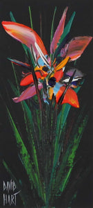 David Hart 'Wild Orchid (Black)'