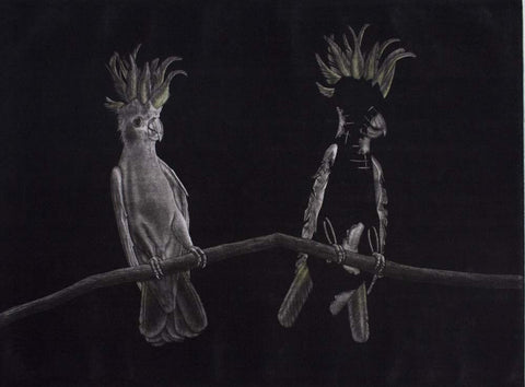 Graeme Peebles 'Australian Parrots Sulphur Crested Cockatoo' - etching on paper