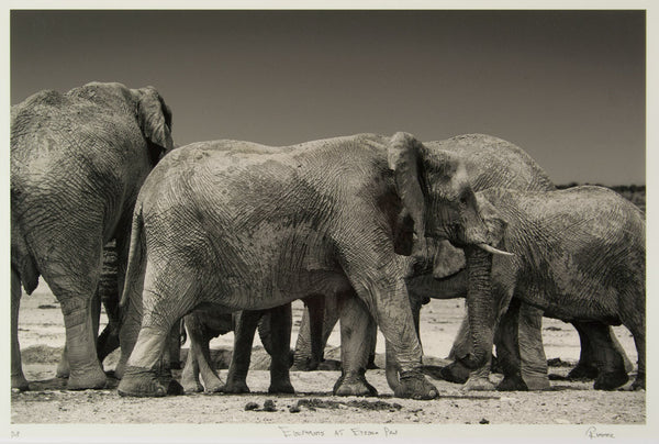 Christopher Rimmer 'Elephants at Etosha Pan' - C type photograph