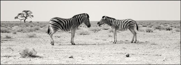 Christopher Rimmer 'Zebra Conversation - Etosha Pan Namibia Unframed' - ink jet print on paper