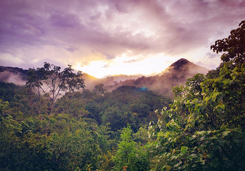 The mountains of Columbia where Arabica coffee comes from