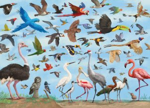 Puzzle All The Birds