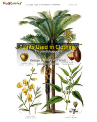 Plants Used In Clothing