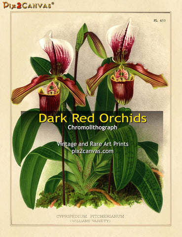 Vintage Dark Red Orchids