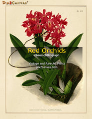 Vintage Red Orchids