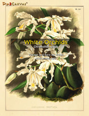 Vintage White Orchids