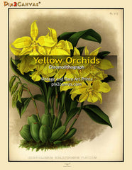 Vintage Yellow Orchids