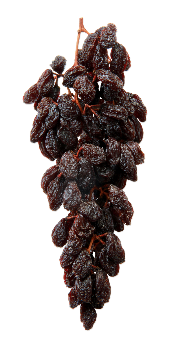 Mojave gold raisins on the vine hanging raisin cluster