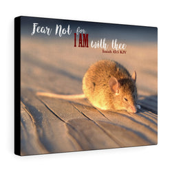 Sleeping Mouse Canvas Gallery Wrap