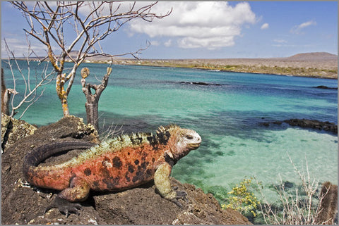 Twelve Months Travel - Part Two - Galapagos Island