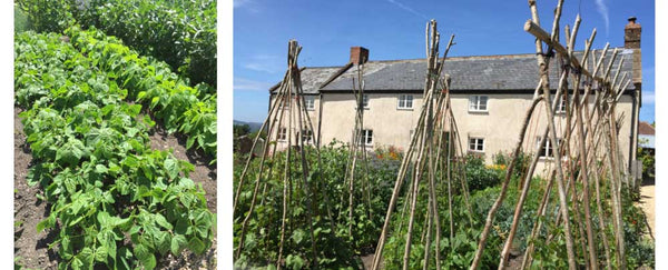 River Cottage - Vegetable Garden