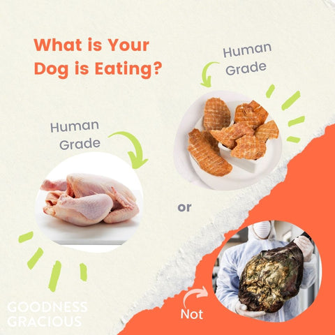 """<p>To answer that question, first you need to have a basic understanding of who has authority over pet food:Enter roughly 52 entities:FDA, AAFCO, and each state in the USA.</p> <p>Legally, pet food falls under the Food Drug and Cosmetic Act which states that all food - for humans and animals equally - must be edible.Unfortunately, the FDA has decided (in written compliance policies and in practice) that they will selectively interpret this law and<a href=""""https://www.fda.gov/regulatory-information/search-fda-guidance-documents/cpg-sec-675200-diversion-adulterated-food-acceptable-animal-feed-use"""" rel=""""noopener noreferrer"""" target=""""_blank"""">allow inedible ingredients into pet food</a>.These inedible ingredients can include condemned meat; or other food stuffs that are rotten, spoiled, or contaminated by filth, pesticides, herbicides, foreign matter.You get the picture.</p>"""