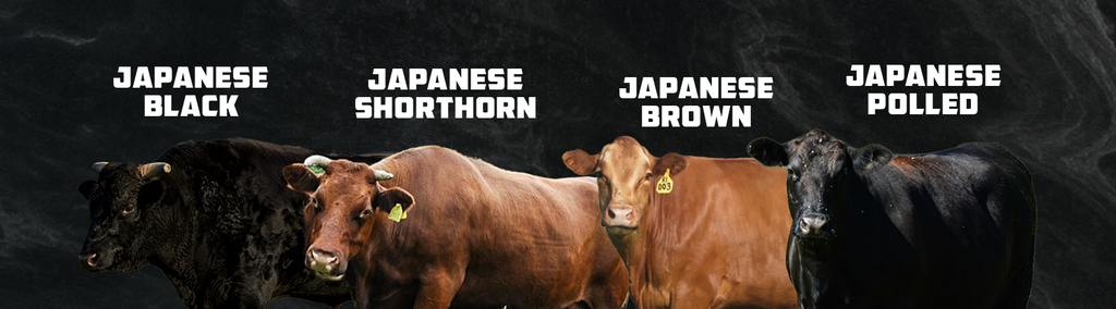All Wagyu cattle varieties next to each other