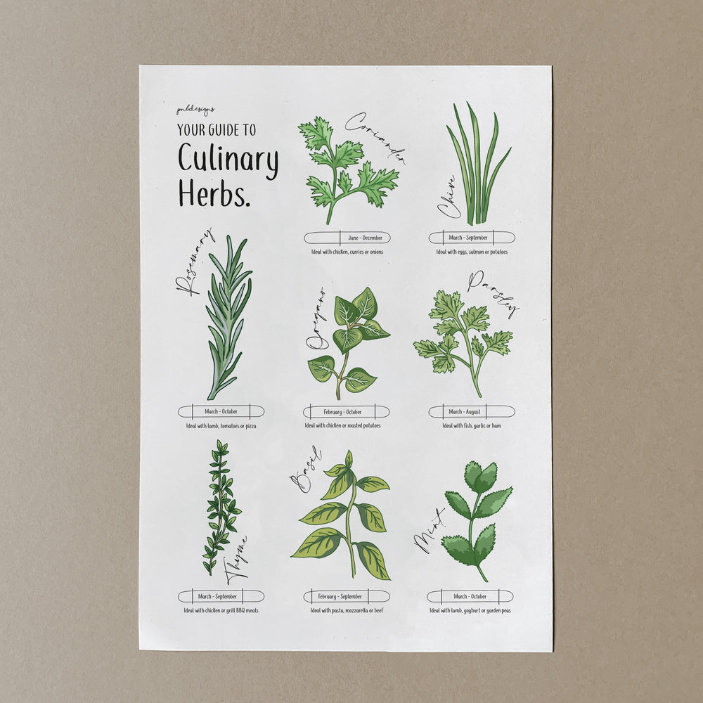 Illustrated Culinary Herbs Guide Print