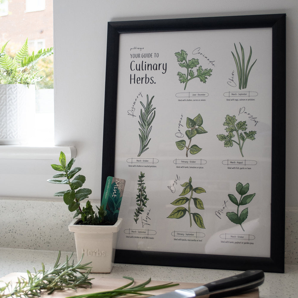 Illustrated Culinary Herbs Guide Print - A3
