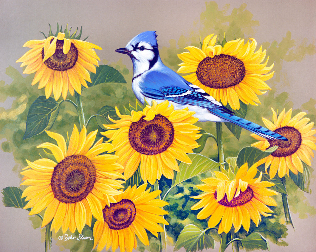 Bluejay and Sunflowers