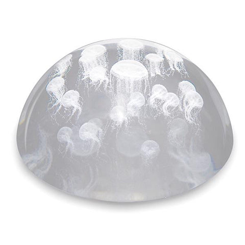 Glass paperweight dome sea nettle
