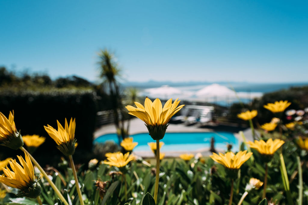 Garden Route Flowers in front of Accommodation Pool