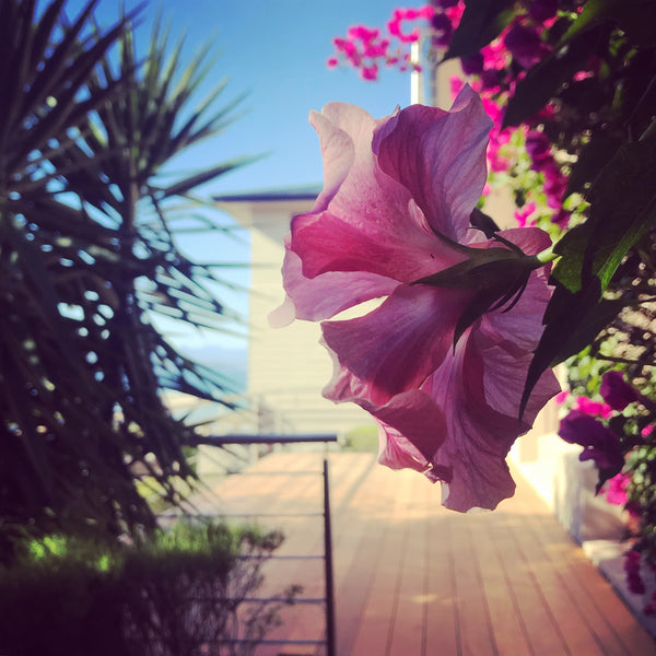 Flowers at Garden Route Accommodation