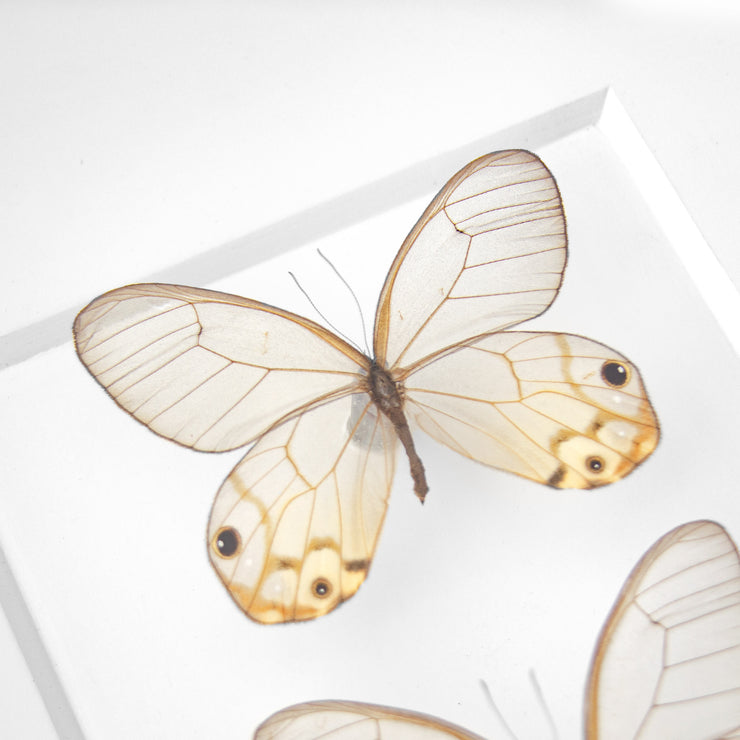CUADRO HOME DECOR DE 2 MARIPOSAS   sku:33825
