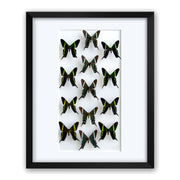 CUADRO HOME DECOR DE 13 MARIPOSAS   sku:34985