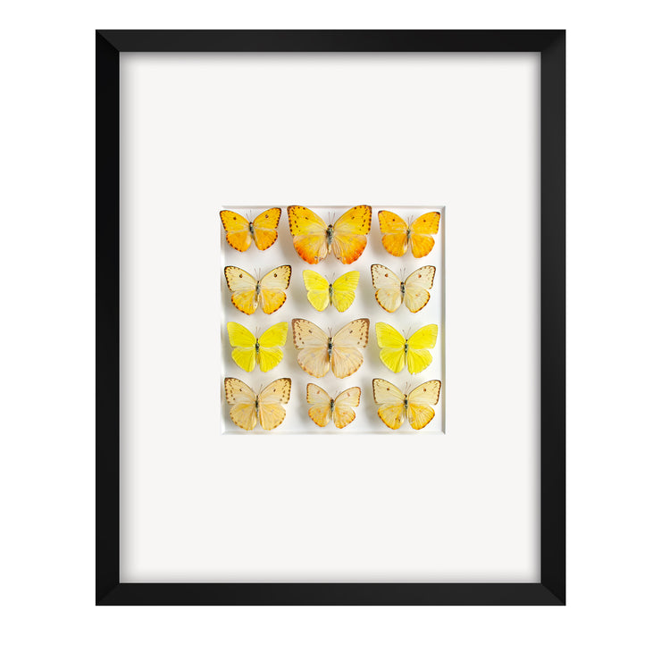 CUADRO HOME DECOR DE 12 MARIPOSAS   sku:35023